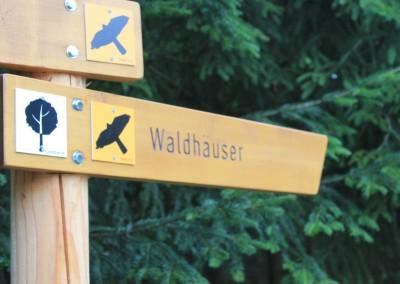 Wandern in Waldhäuser Bayerischer Wald