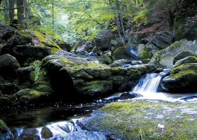 Wandergebiet Lusen Nationalpark Bayerischer Wald