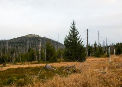 Herbstwanderung Lusen Bayerischer Wald
