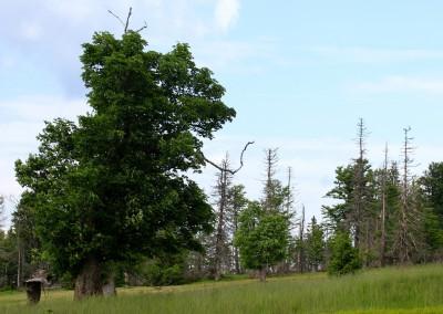 Schachten Nationalpark Bayerischer Wald