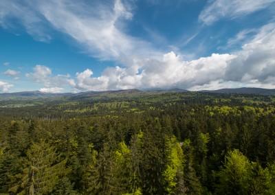Ausblick Baumwipfelpfad Bayerischer Wald